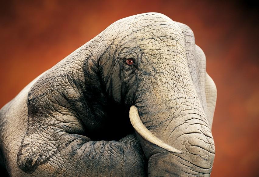 Schroders_Elefante