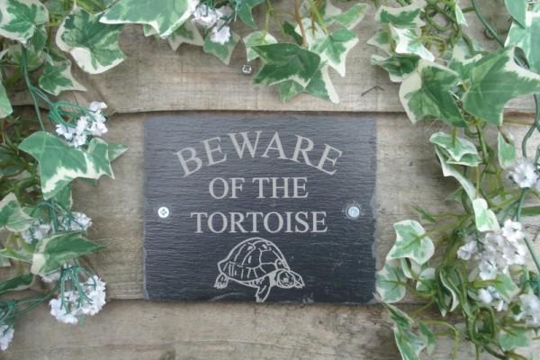 Beware-Of-The-Tortoise-e1408186346258