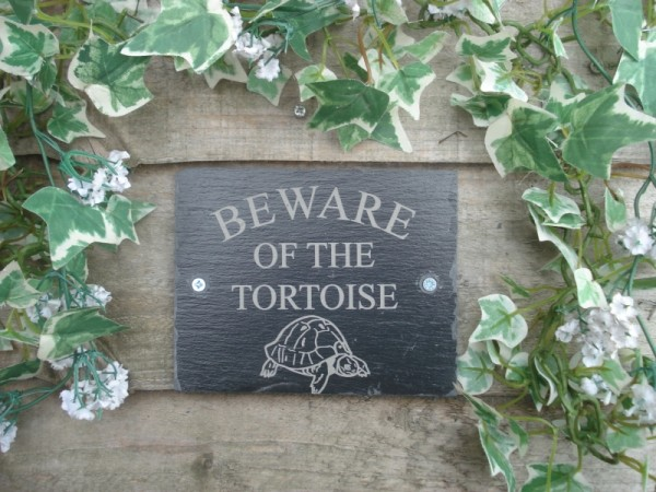 Beware-Of-The-Tortoise-e1408186346258