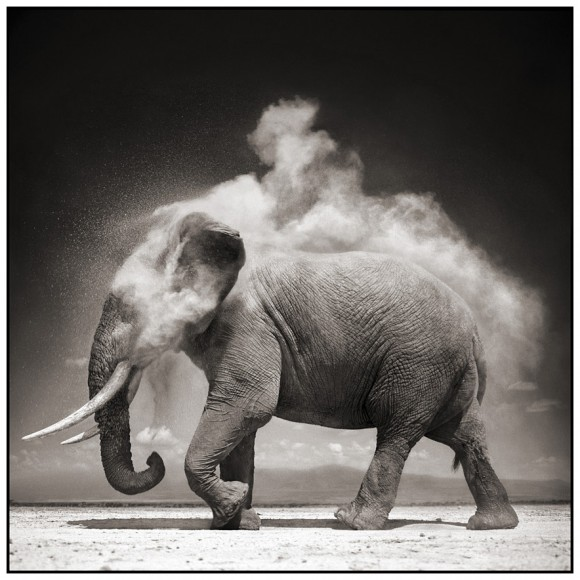 Nick-brandt-Elephant-With-Exploding-Dust