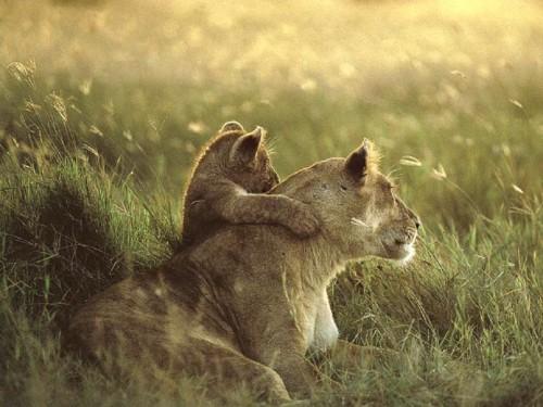 cub-and-mom