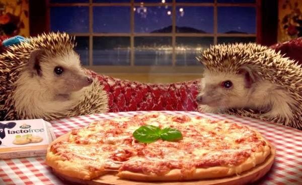 arlo-hedgehogs