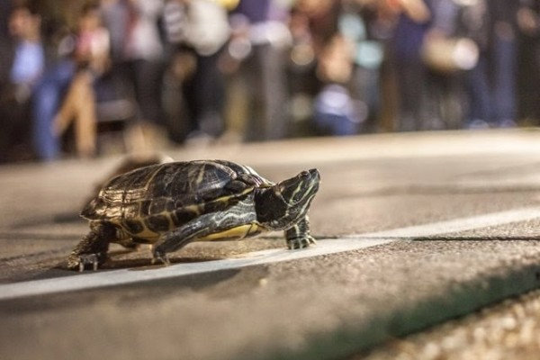 why-haven-t-you-been-to-brennan-s-turtle-races-yet-54