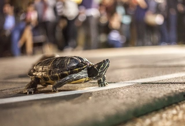 why-haven-t-you-been-to-brennan-s-turtle-races-yet