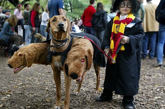 lets start with the kids and one of the best kids scary halloween costumes weve come across has to be thisbut it needs a willing dog - Coolest Kids Halloween Costumes