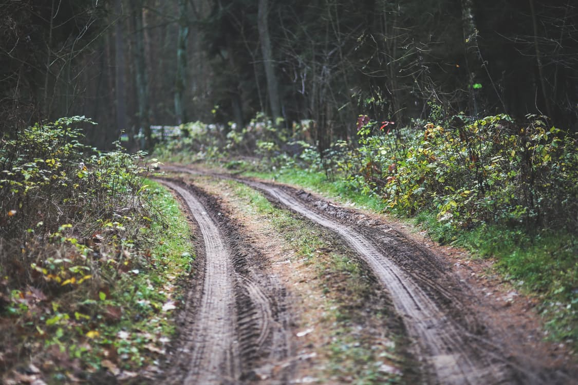 wood-road-dirty-forest