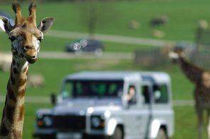 The 3 Coolest British Safari Adventures